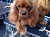 nokia-fotos-september-2009-105.jpg