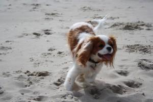 Am Hundestrand auf Usedom