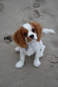 Amy am Hundestrand auf Usedom